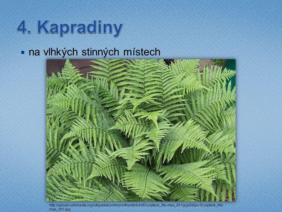  na vlhkých stinných místech http://upload.wikimedia.org/wikipedia/commons/thumb/4/4d/Dryopteris_filix-mas_001.jpg/800px-Dryopteris_filix- mas_001.jp