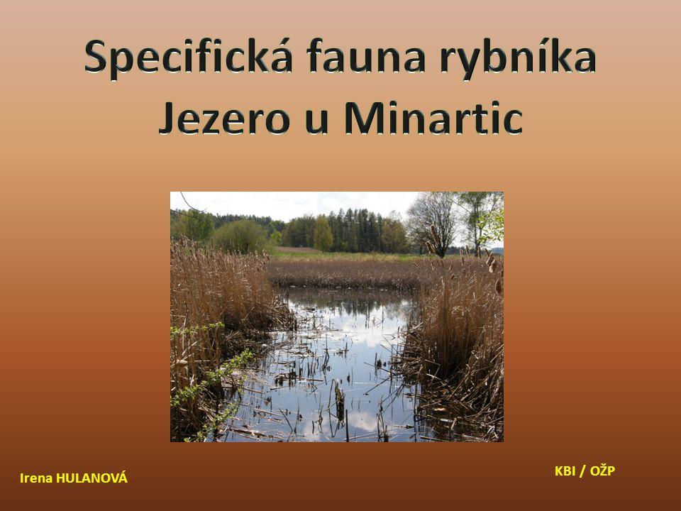 Užovka obojková (Natrix natrix) Slepýš křehký (Anguis fragilis) Užovka hladká (Cronella austriaca) Ještěrka obecná (Lacerta agilis)