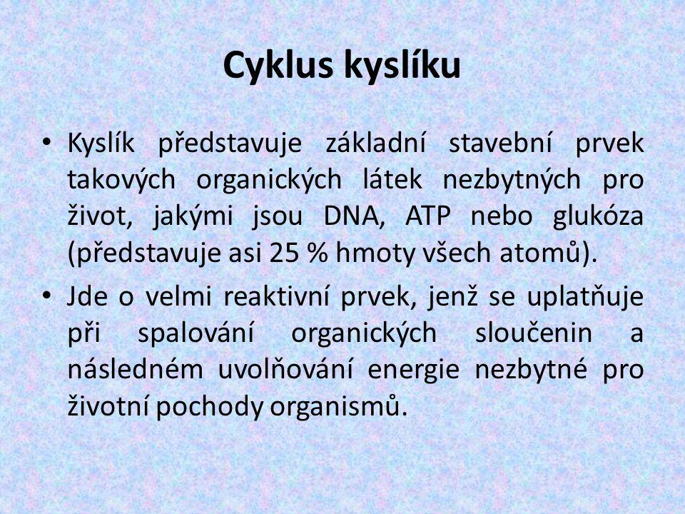 Cyklus kyslíku Kyslík představuje základní stavební prvek takových organických látek nezbytných pro život, jakými jsou DNA, ATP nebo glukóza (představuje asi 25 % hmoty všech atomů).