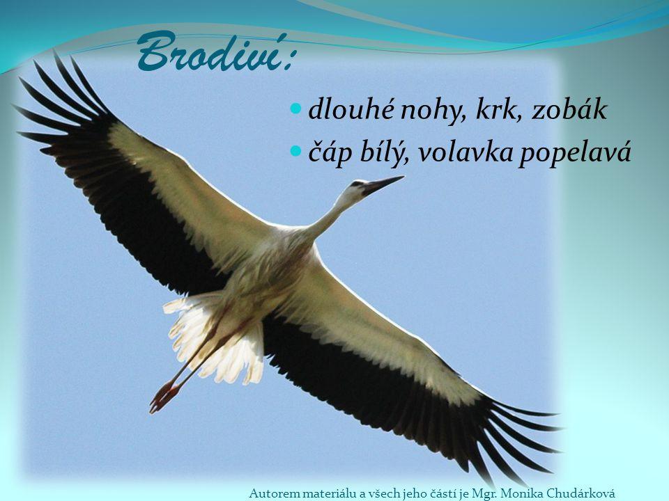 Brodiví: dlouhé nohy, krk, zobák čáp bílý, volavka popelavá Autorem materiálu a všech jeho částí je Mgr. Monika Chudárková