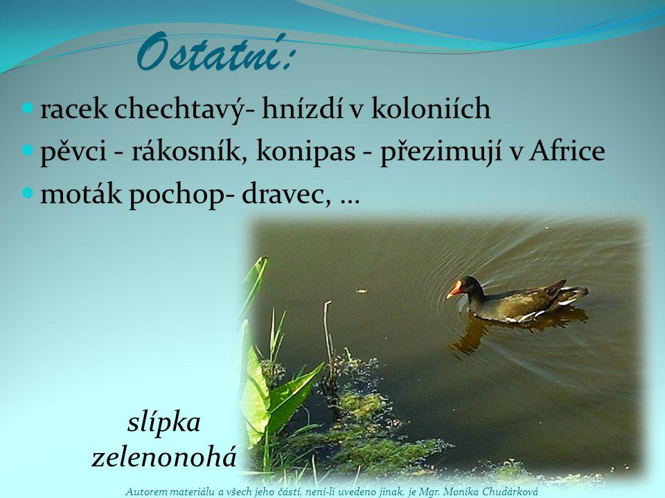 Ostatní: racek chechtavý- hnízdí v koloniích pěvci - rákosník, konipas - přezimují v Africe moták pochop- dravec, … slípka zelenonohá Autorem materiál