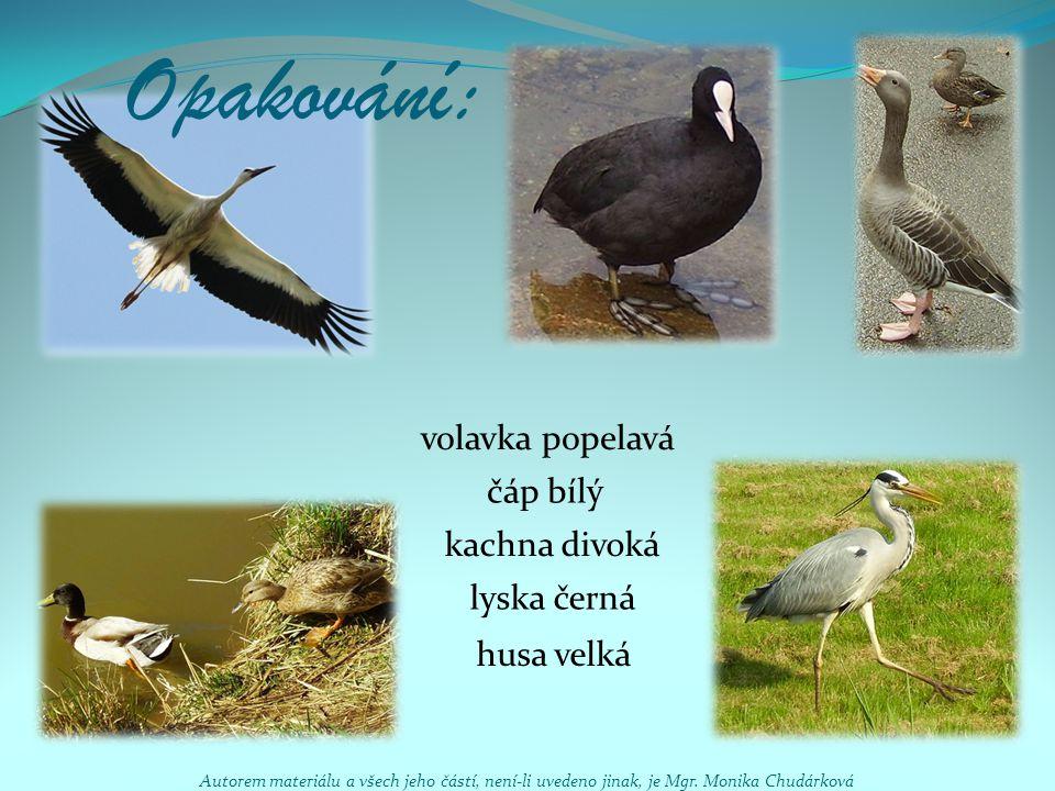 Opakování: lyska černá kachna divoká husa velká čáp bílý volavka popelavá Autorem materiálu a všech jeho částí, není-li uvedeno jinak, je Mgr. Monika
