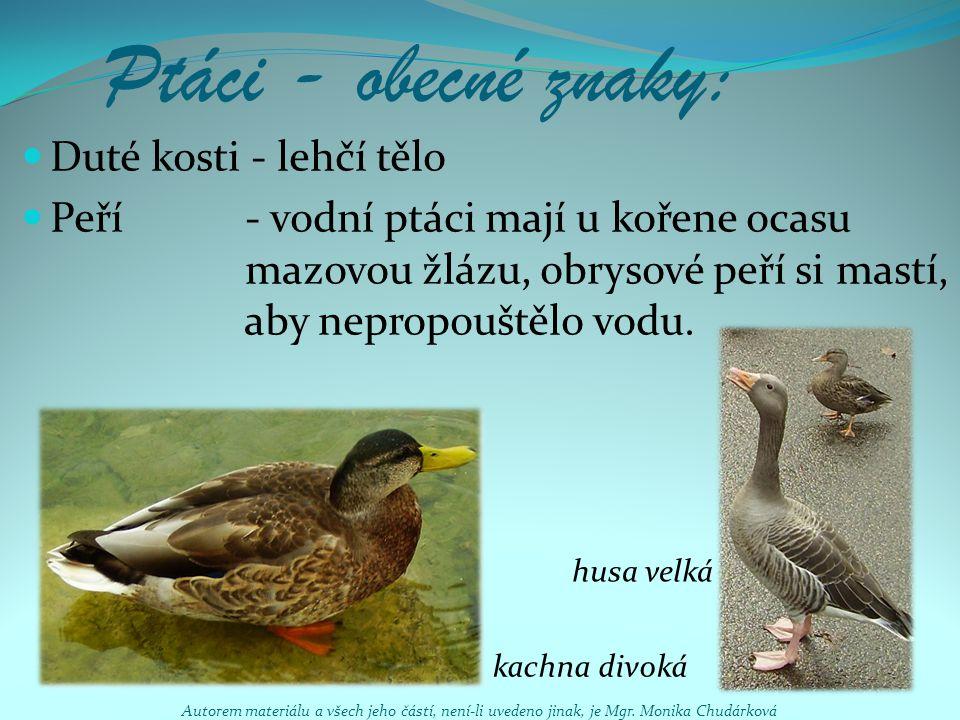 Ptáci - obecné znaky: Duté kosti - lehčí tělo Peří - vodní ptáci mají u kořene ocasu mazovou žlázu, obrysové peří si mastí, aby nepropouštělo vodu. hu