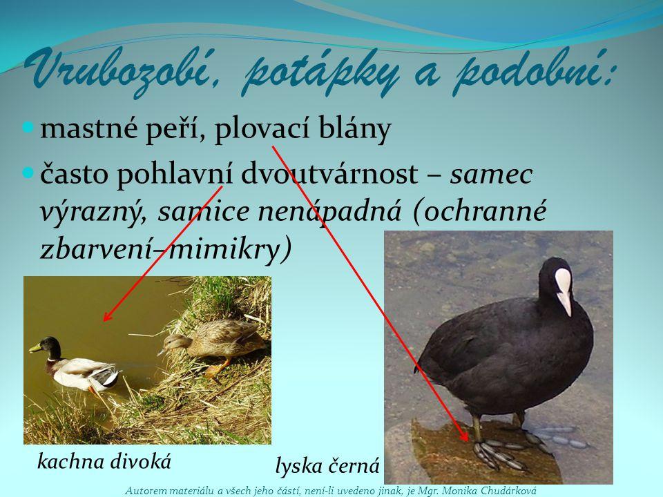 Vrubozobí, potápky a podobní: mastné peří, plovací blány často pohlavní dvoutvárnost – samec výrazný, samice nenápadná (ochranné zbarvení–mimikry) lys