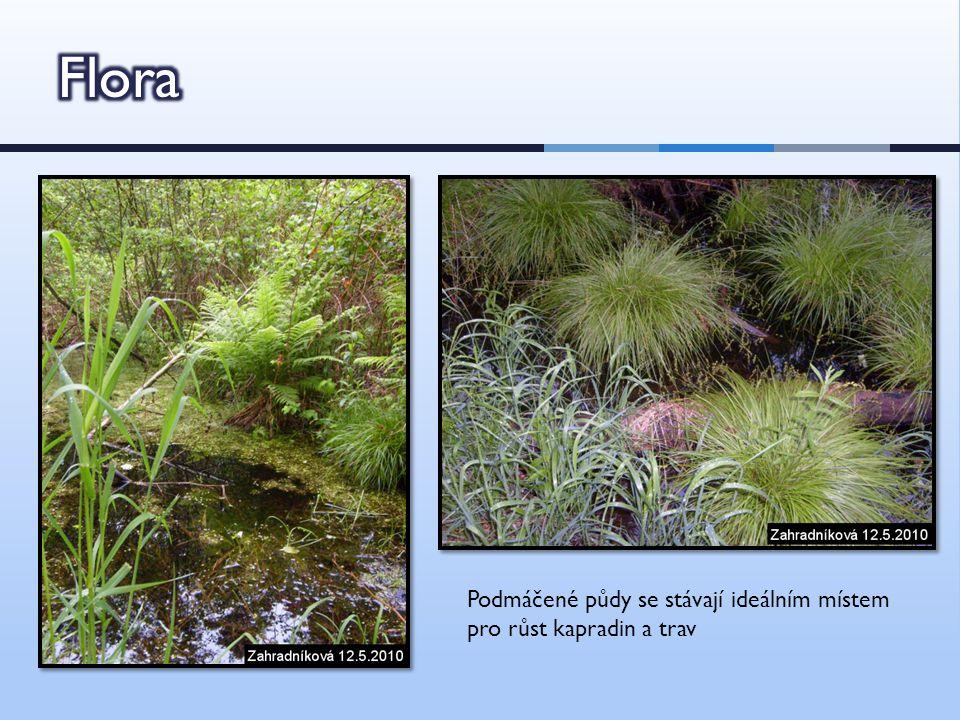  Diverzita stanovišť → velké množství různých druhů bezobratlých živočichů  Např.: škeble rybničná, rašelinní mravenci, otakárek fenyklový ad.
