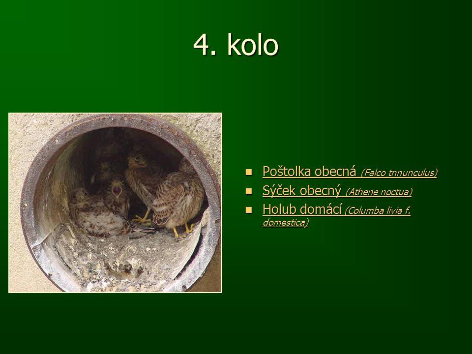 4. kolo Poštolka obecná (Falco tnnunculus) Poštolka obecná (Falco tnnunculus) Poštolka obecná (Falco tnnunculus) Poštolka obecná (Falco tnnunculus) Sý