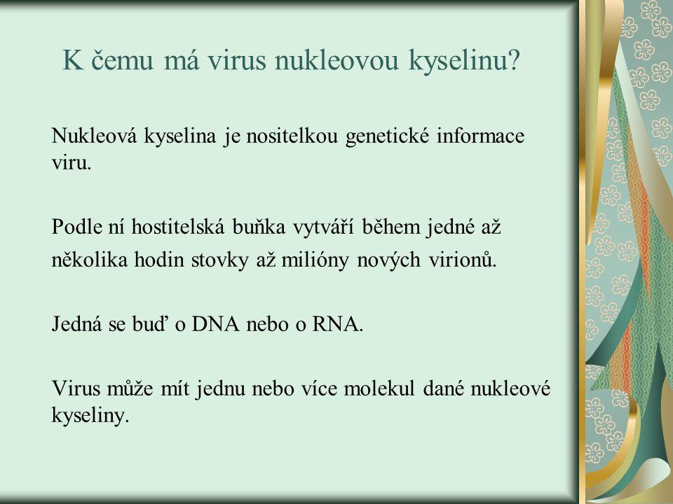 K čemu má virus nukleovou kyselinu? Nukleová kyselina je nositelkou genetické informace viru. Podle ní hostitelská buňka vytváří během jedné až několi