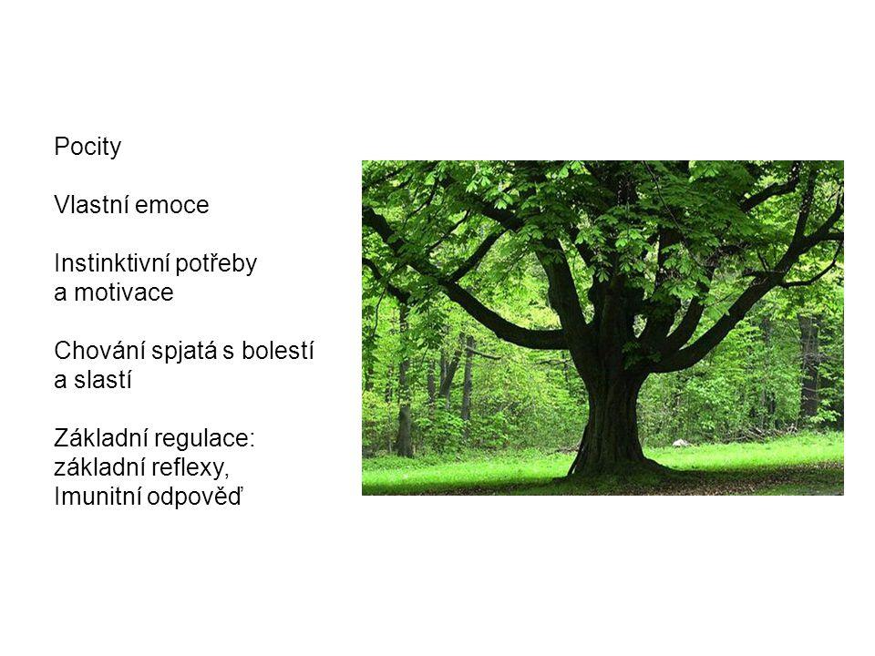 Zdroje F.Koukolík. Lidský mozek. Třetí, přepracované a doplněné vydání, Galén, 2012 A.R.