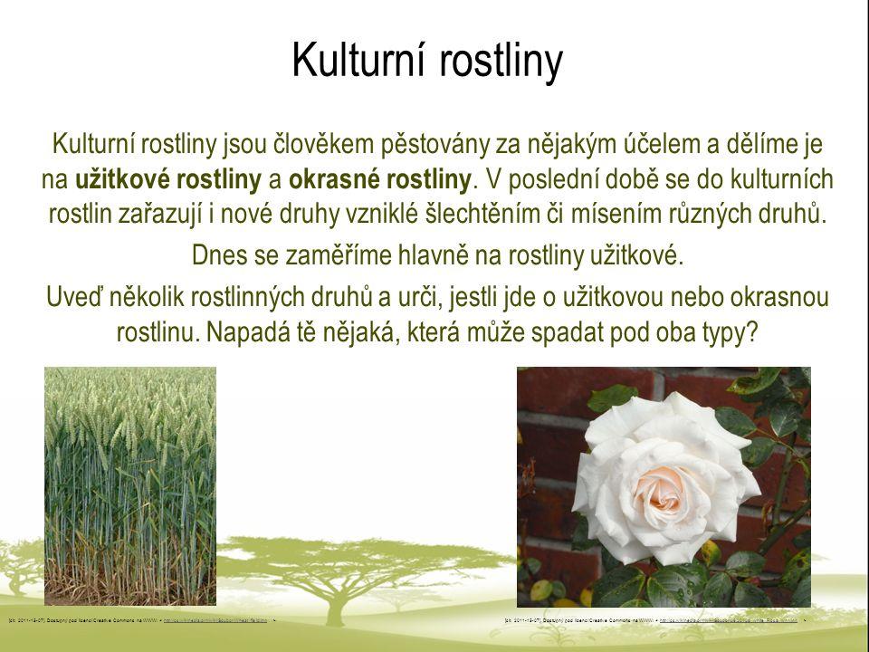 Kulturní rostliny Kulturní rostliny jsou člověkem pěstovány za nějakým účelem a dělíme je na užitkové rostliny a okrasné rostliny. V poslední době se