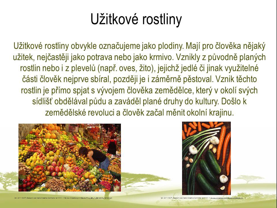 Užitkové rostliny Užitkové rostliny obvykle označujeme jako plodiny. Mají pro člověka nějaký užitek, nejčastěji jako potrava nebo jako krmivo. Vznikly