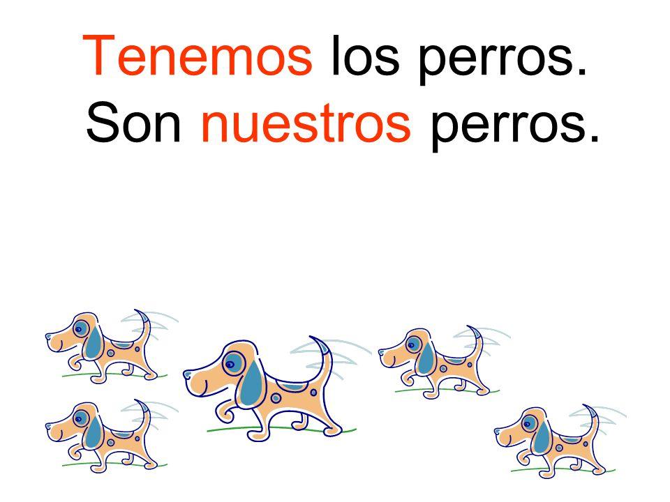 Tenemos los perros. Son nuestros perros.
