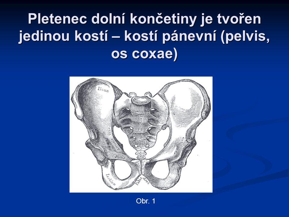 Pletenec dolní končetiny je tvořen jedinou kostí – kostí pánevní (pelvis, os coxae) Obr. 1