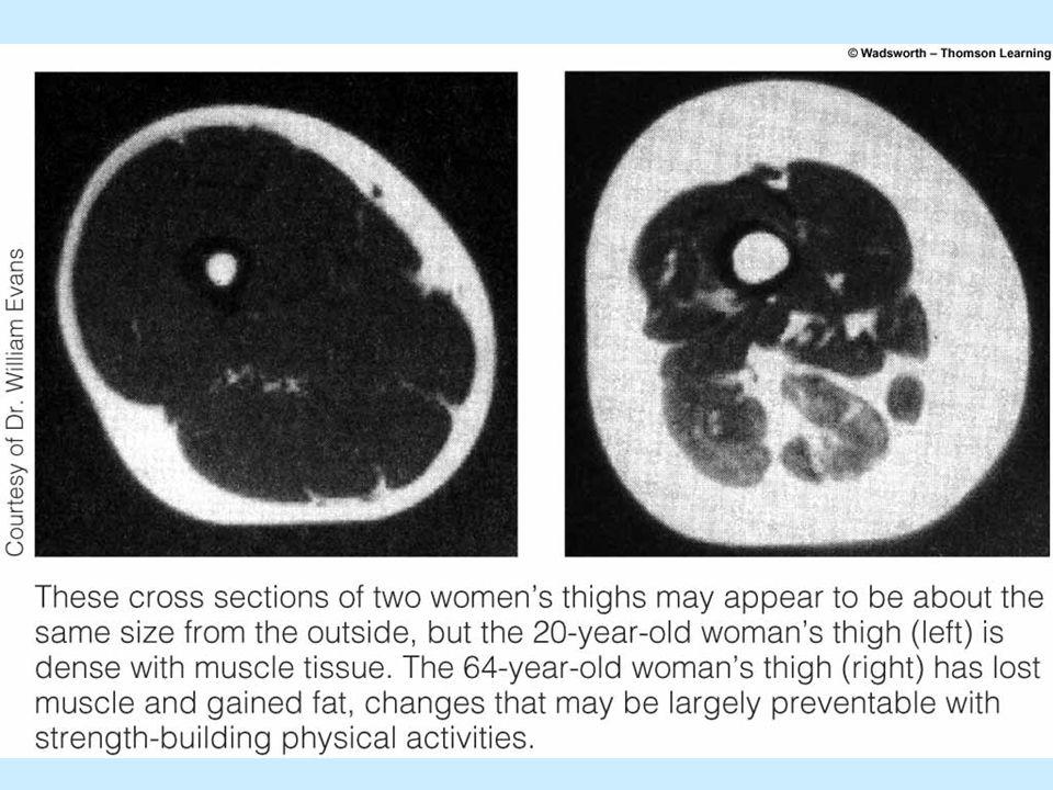 Proces stárnutí Stres –Reakce na stres Fyziologické změny –Tělesná váha –Tělesná skladba Sarkopenie — ochabování svalů vzpěračů, které může doprovázet