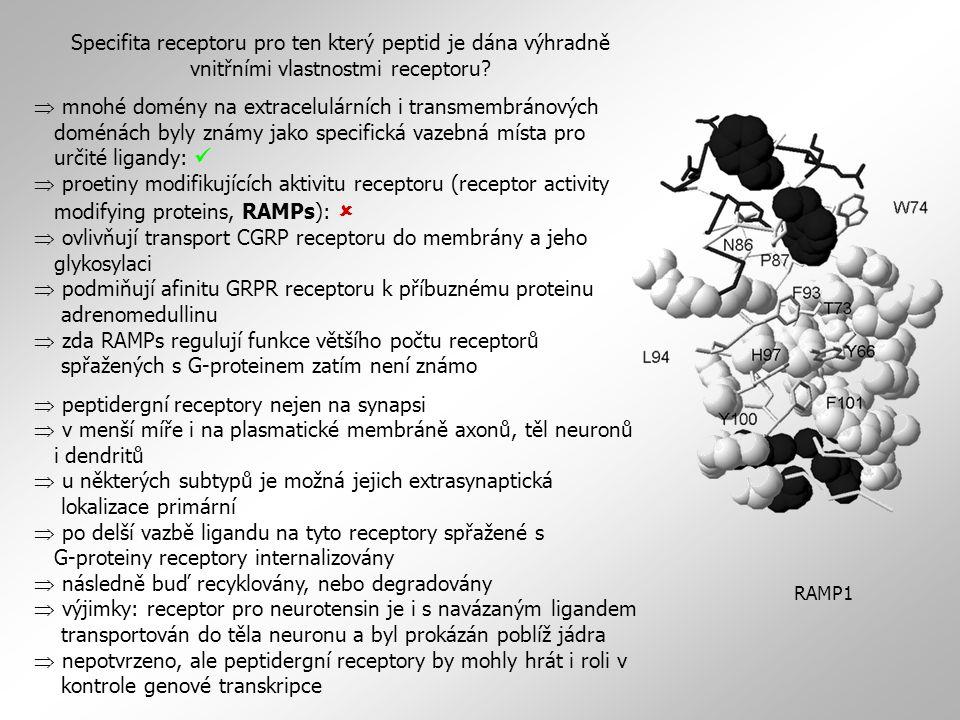Specifita receptoru pro ten který peptid je dána výhradně vnitřními vlastnostmi receptoru.