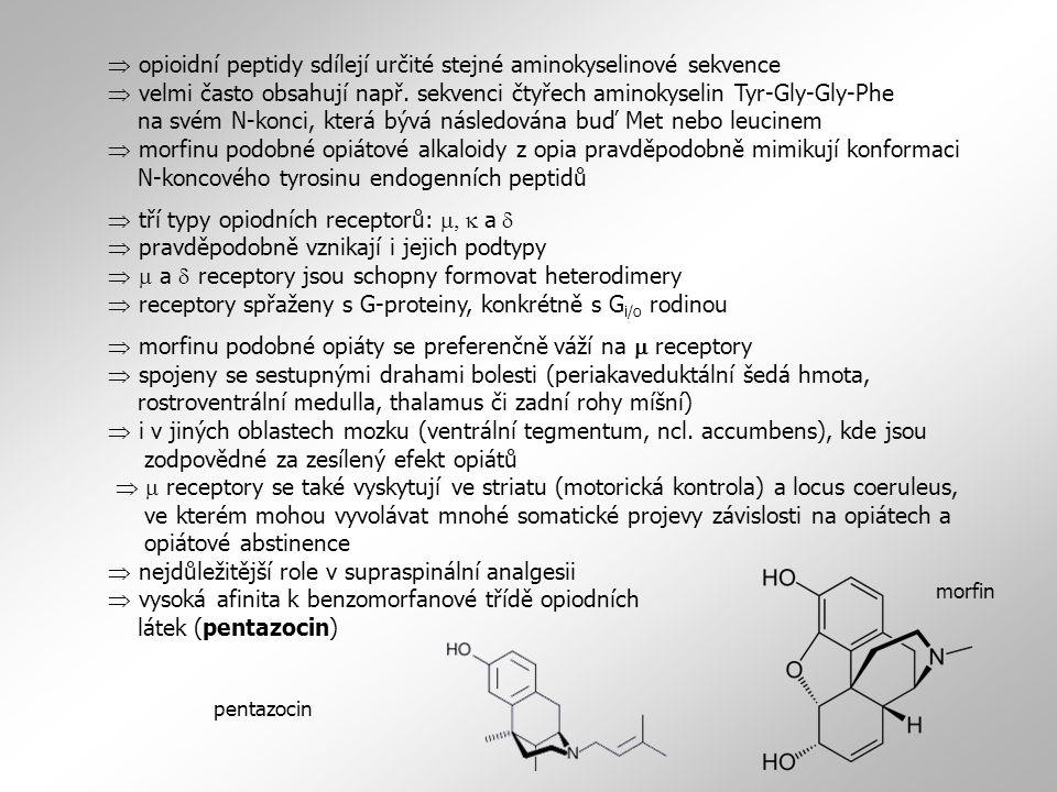  opioidní peptidy sdílejí určité stejné aminokyselinové sekvence  velmi často obsahují např.