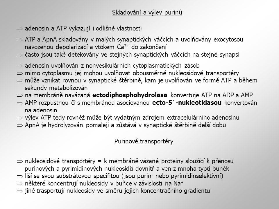  adenosin a ATP vykazují i odlišné vlastnosti  ATP a ApnA skladovány v malých synaptických váčcích a uvolňovány exocytosou navozenou depolarizací a vtokem Ca 2+ do zakončení  často jsou také detekovány ve stejných synaptických váčcích na stejné synapsi  adenosin uvolňován z nonvesikulárních cytoplasmatických zásob  mimo cytoplasmu jej mohou uvolňovat obousměrné nukleosidové transportéry  může vznikat rovnou v synaptické štěrbině, kam je uvolňován ve formě ATP a během sekundy metabolizován  na membráně navázaná ectodiphosphohydrolasa konvertuje ATP na ADP a AMP  AMP rozpustnou či s membránou asociovanou ecto-5´-nukleotidasou konvertován na adenosin  výlev ATP tedy rovněž může být vydatným zdrojem extracelulárního adenosinu  ApnA je hydrolyzován pomaleji a zůstává v synaptické štěrbině delší dobu Skladování a výlev purinů Purinové transportéry  nukleosidové transportéry = k membráně vázané proteiny sloužící k přenosu purinových a pyrimidinových nukleosidů dovnitř a ven z mnoha typů buněk  liší se svou substrátovou specifitou (jsou purin- nebo pyrimidinselektivní)  některé koncentrují nukleosidy v buňce v závislosti na Na +  jiné trasportují nukleosidy ve směru jejich koncentračního gradientu