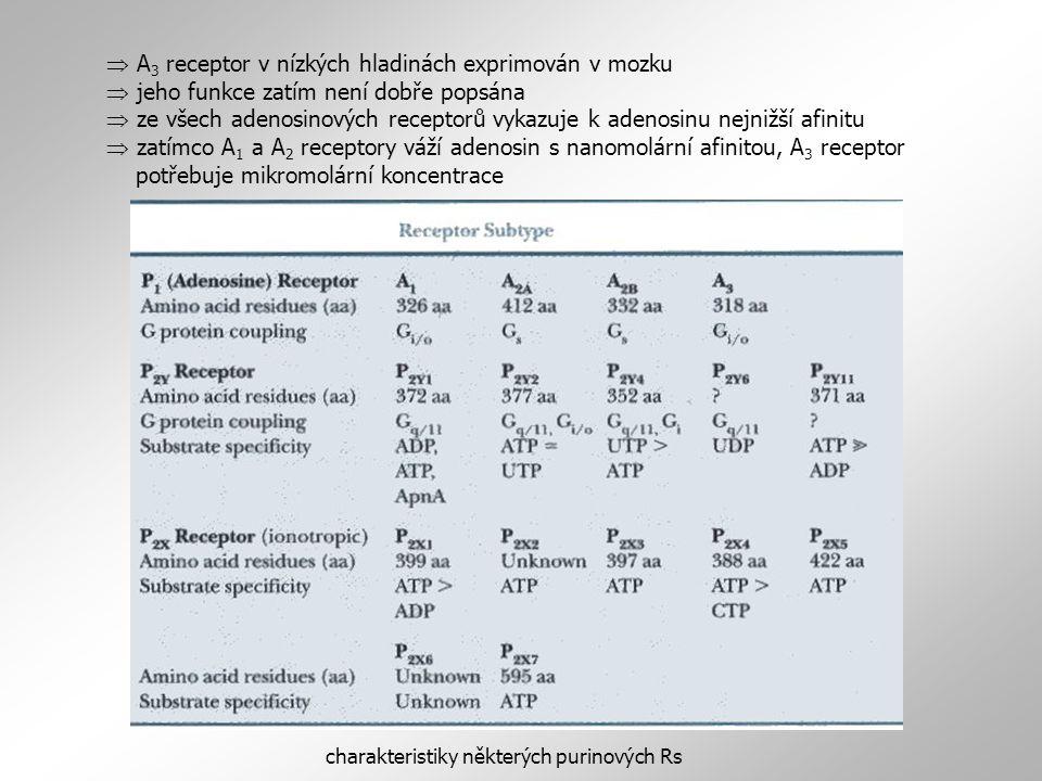  A 3 receptor v nízkých hladinách exprimován v mozku  jeho funkce zatím není dobře popsána  ze všech adenosinových receptorů vykazuje k adenosinu nejnižší afinitu  zatímco A 1 a A 2 receptory váží adenosin s nanomolární afinitou, A 3 receptor potřebuje mikromolární koncentrace charakteristiky některých purinových Rs