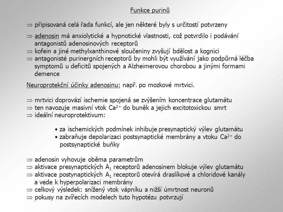  připisovaná celá řada funkcí, ale jen některé byly s určitostí potvrzeny  adenosin má anxiolytické a hypnotické vlastnosti, což potvrdilo i podávání antagonistů adenosinových receptorů  kofein a jiné methylxanthinové sloučeniny zvyšují bdělost a kognici  antagonisté purinergních receptorů by mohli být využívání jako podpůrná léčba symptomů u deficitů spojených a Alzheimerovou chorobou a jinými formami demence Neuroprotekční účinky adenosinu: např.