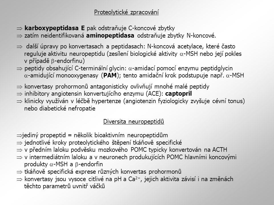  karboxypeptidasa E pak odstraňuje C-koncové zbytky  zatím neidentifikovaná aminopeptidasa odstraňuje zbytky N-koncové.