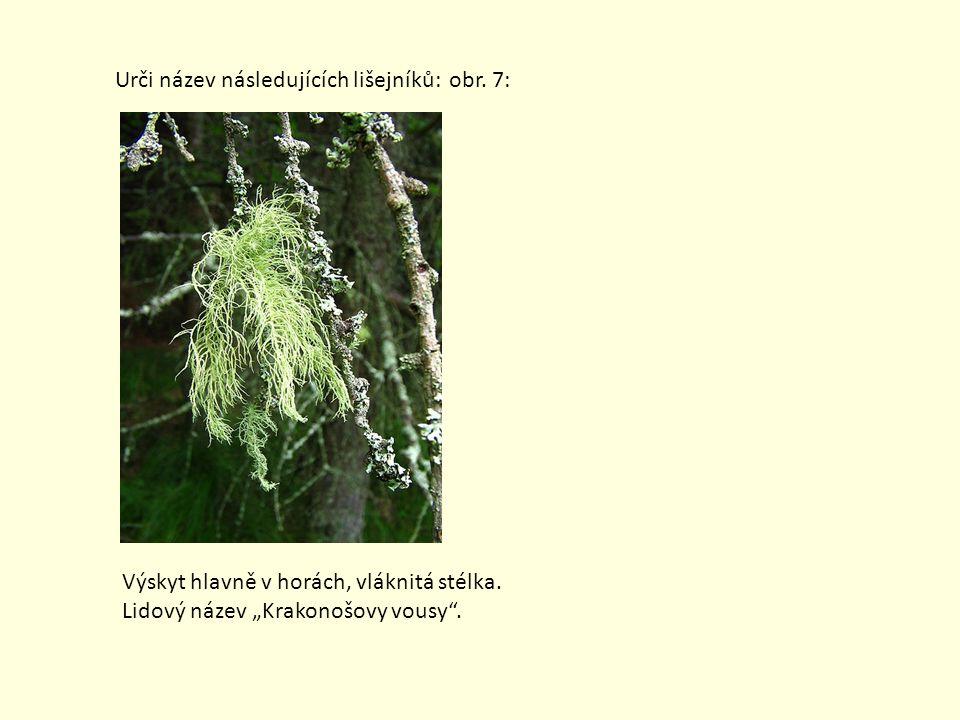 """Urči název následujících lišejníků: obr. 7: Výskyt hlavně v horách, vláknitá stélka. Lidový název """"Krakonošovy vousy""""."""