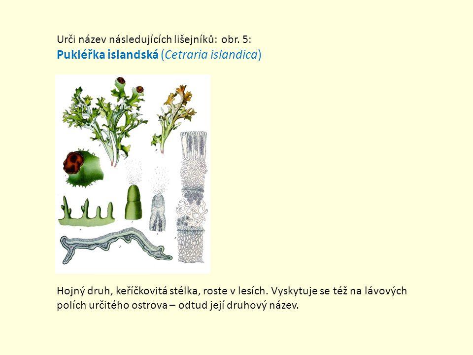 Urči název následujících lišejníků: obr. 5: Pukléřka islandská (Cetraria islandica) Hojný druh, keříčkovitá stélka, roste v lesích. Vyskytuje se též n