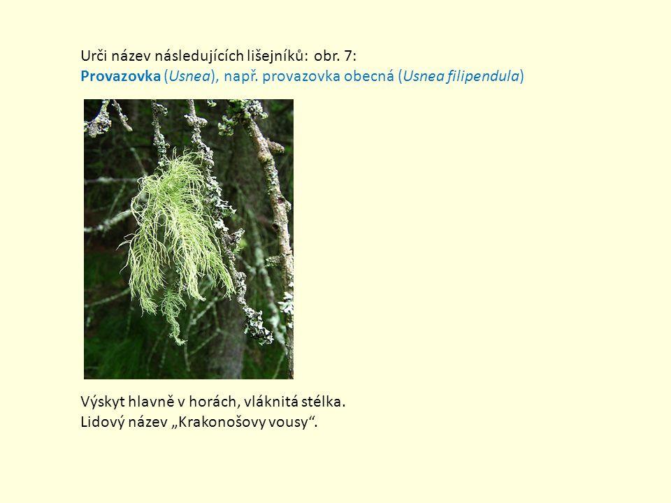 Urči název následujících lišejníků: obr. 7: Provazovka (Usnea), např. provazovka obecná (Usnea filipendula) Výskyt hlavně v horách, vláknitá stélka. L