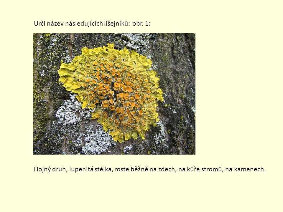 Urči název následujících lišejníků: obr. 1: Hojný druh, lupenitá stélka, roste běžně na zdech, na kůře stromů, na kamenech.