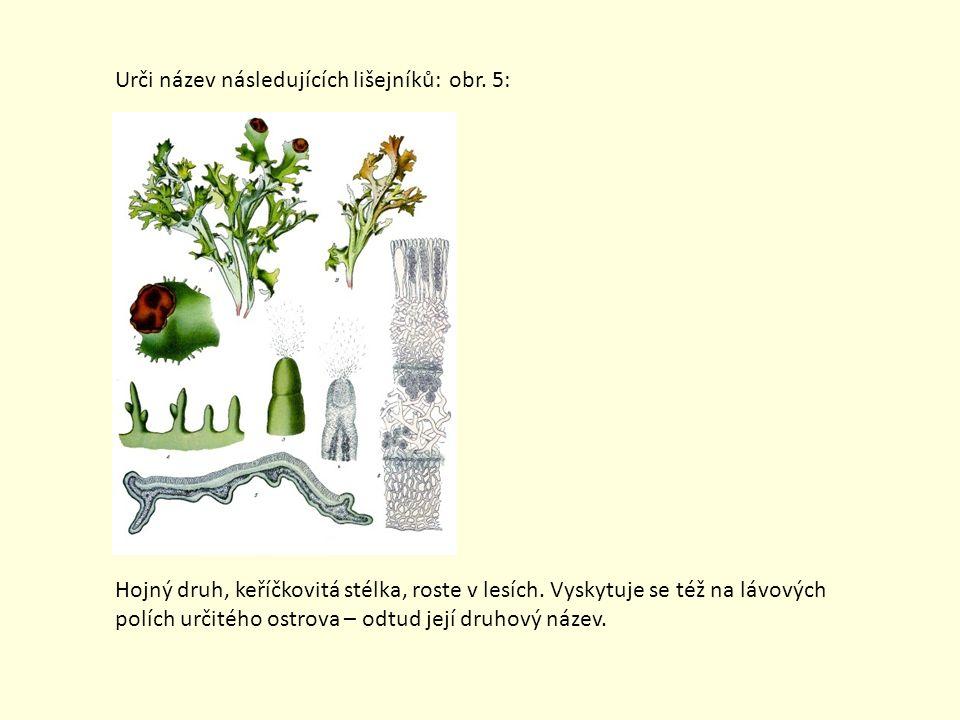 Urči název následujících lišejníků: obr. 5: Hojný druh, keříčkovitá stélka, roste v lesích. Vyskytuje se též na lávových polích určitého ostrova – odt