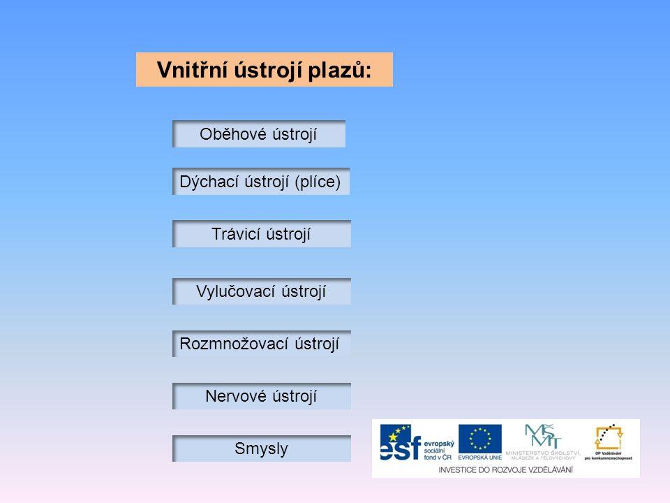 Vnitřní ústrojí plazů: Oběhové ústrojí Dýchací ústrojí (plíce) Trávicí ústrojí Vylučovací ústrojí Rozmnožovací ústrojí Nervové ústrojí Smysly