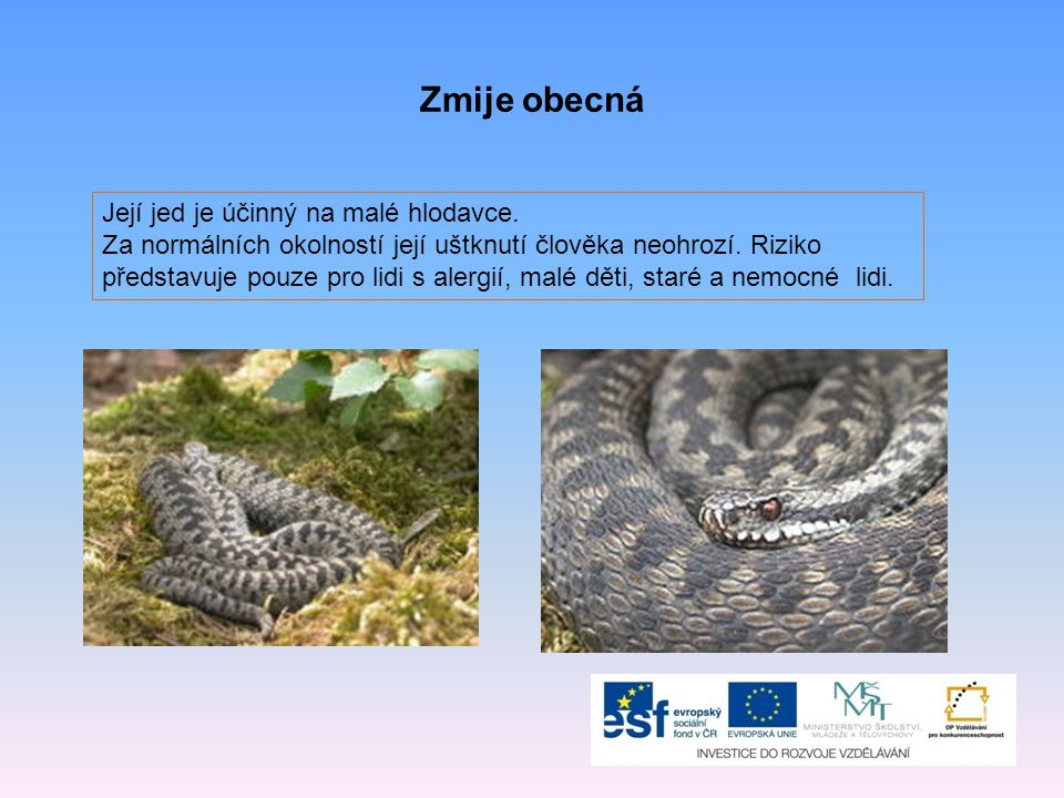Hlavní potravou ještěrek je Jedna z volně žijících užovek v ČR se nazývá Plazi, kterým se mláďata líhnou z vajíček v těle matky, se nazývají Plaz, který v ohrožení samovolně oddělí ocas od těla Jedna z hlavní částí kostry plazů HMYZ STROMOVÁ ŽIVORODÍ JEŠTĚRKA LEBKA ŘEŠENÍ: Jediný jedovatý had žijící u nás ve volné přírodě je zmije.