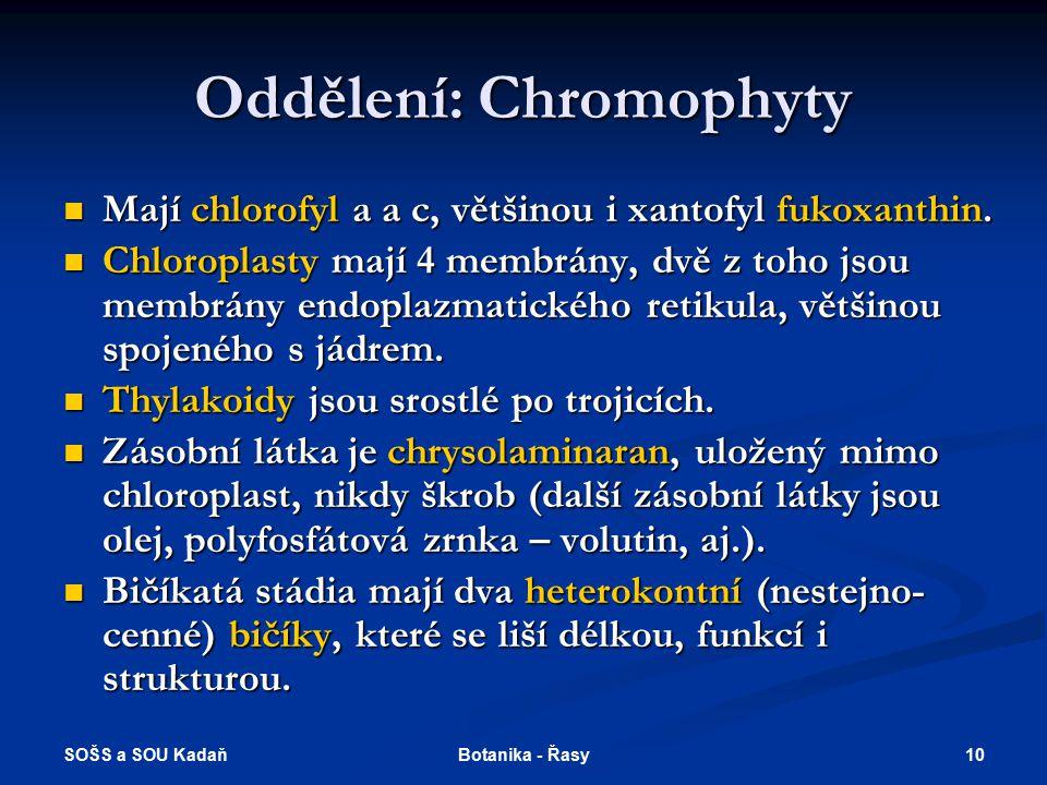 SOŠS a SOU Kadaň 9Botanika - Řasy Oddělení: Skrytěnky Jednobuněčné, dvoubičíkaté organismy Jednobuněčné, dvoubičíkaté organismy Chlorofyly a, c, karot