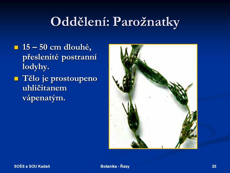 SOŠS a SOU Kadaň 24Botanika - Řasy Třída: Zelenivky – Chlorophyceae Zrněnka – zelená řasa s kokální stélkou