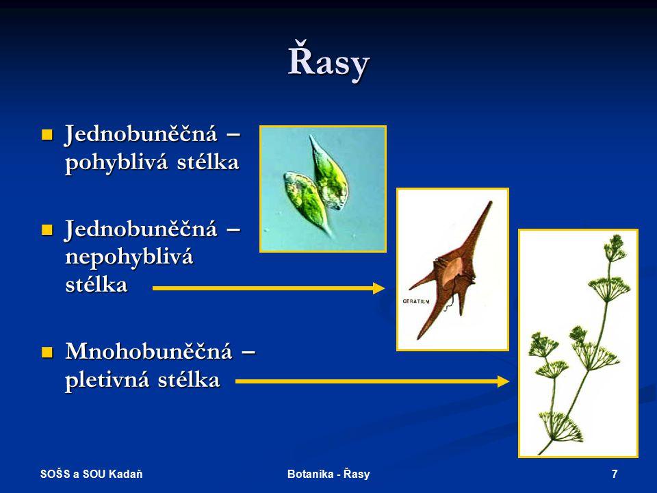 SOŠS a SOU Kadaň 6Botanika - Řasy Stavba stélky řas Pletivná (pseudoparenchymatická) - dělení buněk ve dvou nebo třech kolmých rovinách. Sifonální (tr