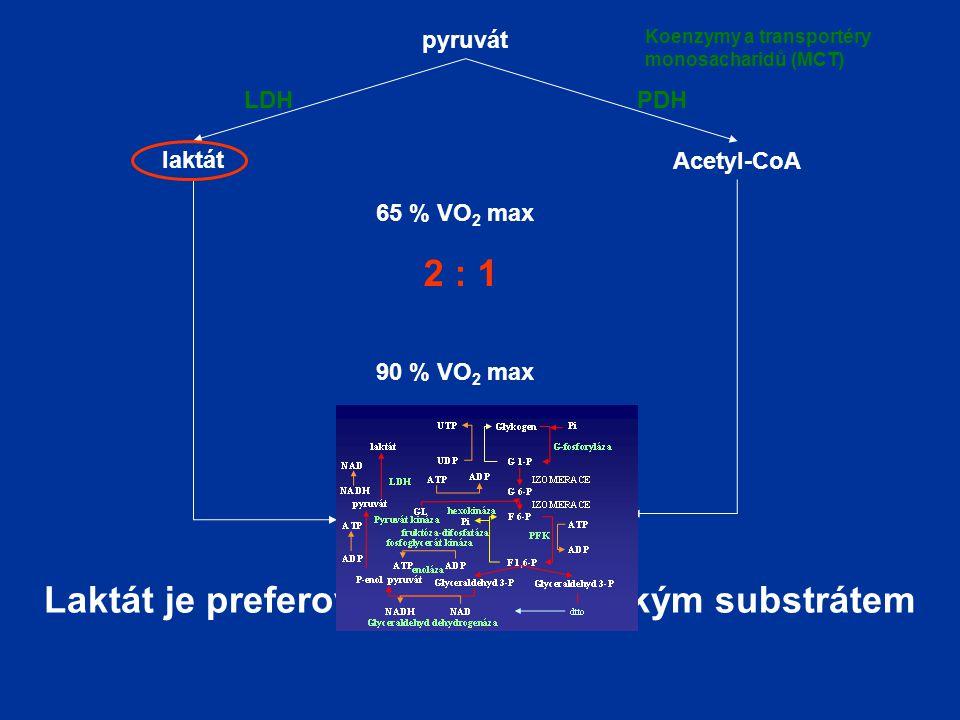 pyruvát laktát Acetyl-CoA LDHPDH 65 % VO 2 max 2 : 1 90 % VO 2 max 3 : 1 Laktát je preferovaným energetickým substrátem Koenzymy a transportéry monosacharidů (MCT)