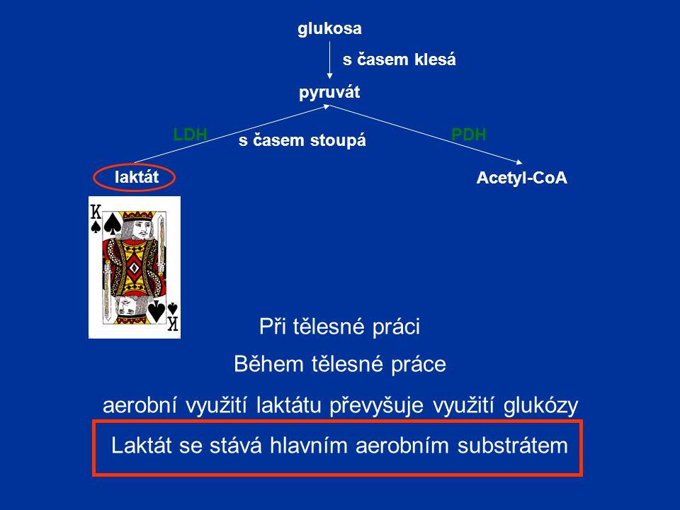 pyruvát laktát Acetyl-CoA LDHPDH glukosa s časem stoupá s časem klesá Při tělesné práci Během tělesné práce aerobní využití laktátu převyšuje využití glukózy Laktát se stává hlavním aerobním substrátem