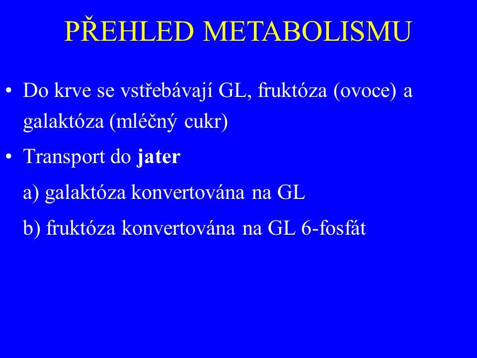 PŘEHLED METABOLISMU Do krve se vstřebávají GL, fruktóza (ovoce) a galaktóza (mléčný cukr) Transport do jater a) galaktóza konvertována na GL b) fruktóza konvertována na GL 6-fosfát