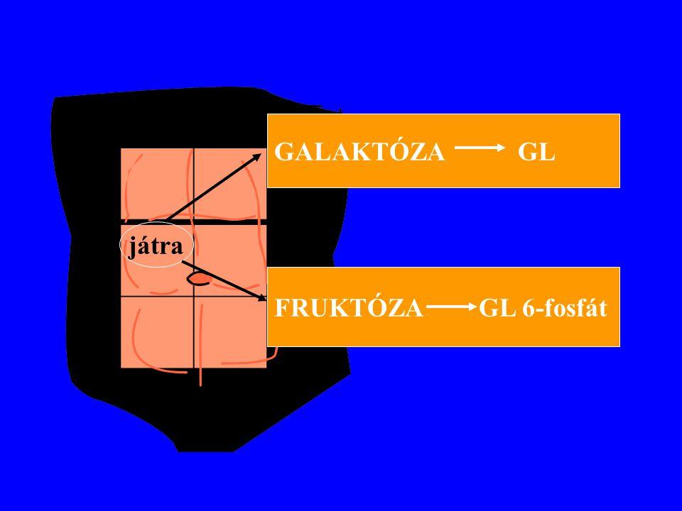 játra GALAKTÓZA GL FRUKTÓZAGL 6-fosfát