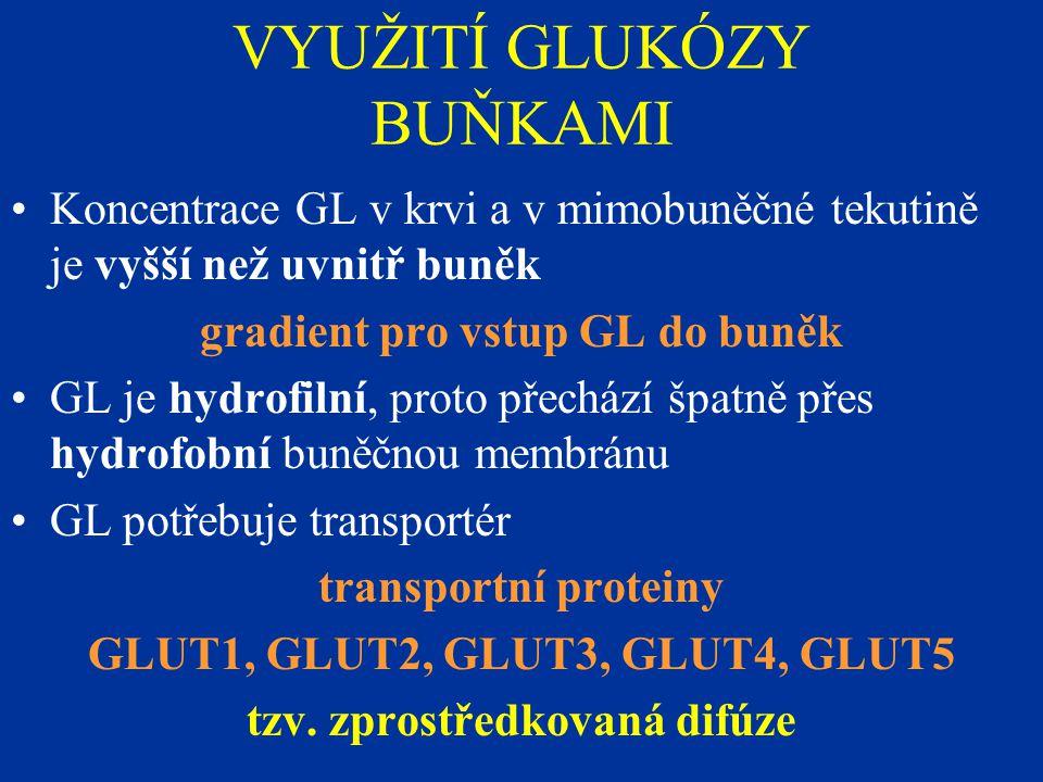 VYUŽITÍ GLUKÓZY BUŇKAMI Koncentrace GL v krvi a v mimobuněčné tekutině je vyšší než uvnitř buněk gradient pro vstup GL do buněk GL je hydrofilní, proto přechází špatně přes hydrofobní buněčnou membránu GL potřebuje transportér transportní proteiny GLUT1, GLUT2, GLUT3, GLUT4, GLUT5 tzv.