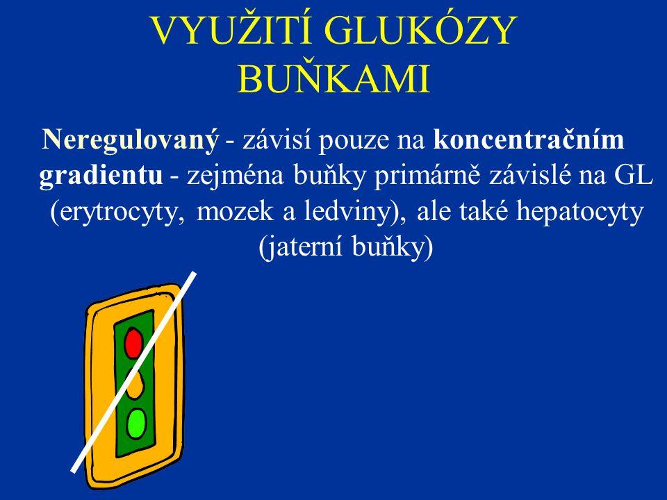 VYUŽITÍ GLUKÓZY BUŇKAMI Neregulovaný - závisí pouze na koncentračním gradientu - zejména buňky primárně závislé na GL (erytrocyty, mozek a ledviny), ale také hepatocyty (jaterní buňky)