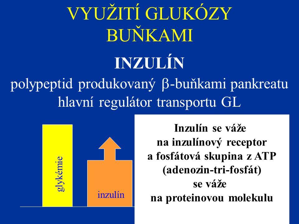 VYUŽITÍ GLUKÓZY BUŇKAMI INZULÍN polypeptid produkovaný  -buňkami pankreatu hlavní regulátor transportu GL glykémie inzulín Inzulín se váže na inzulín