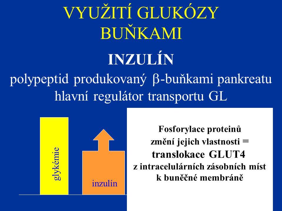VYUŽITÍ GLUKÓZY BUŇKAMI INZULÍN polypeptid produkovaný  -buňkami pankreatu hlavní regulátor transportu GL glykémie inzulín Fosforylace proteinů změní