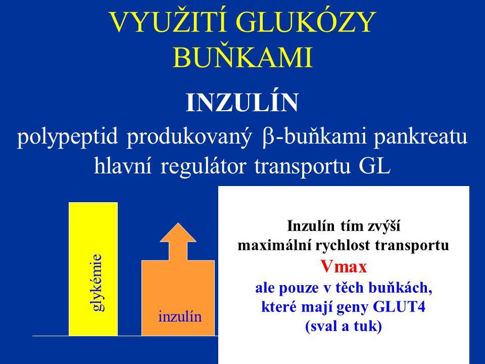 VYUŽITÍ GLUKÓZY BUŇKAMI INZULÍN polypeptid produkovaný  -buňkami pankreatu hlavní regulátor transportu GL glykémie inzulín Inzulín tím zvýší maximální rychlost transportu Vmax ale pouze v těch buňkách, které mají geny GLUT4 (sval a tuk)