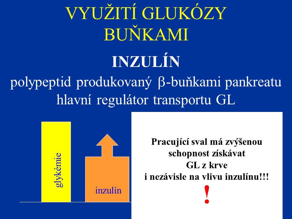 VYUŽITÍ GLUKÓZY BUŇKAMI INZULÍN polypeptid produkovaný  -buňkami pankreatu hlavní regulátor transportu GL glykémie inzulín Pracující sval má zvýšenou schopnost získávat GL z krve i nezávisle na vlivu inzulínu!!.
