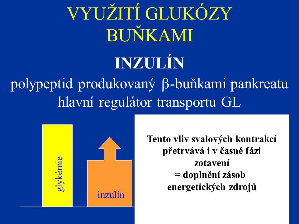VYUŽITÍ GLUKÓZY BUŇKAMI INZULÍN polypeptid produkovaný  -buňkami pankreatu hlavní regulátor transportu GL glykémie inzulín Tento vliv svalových kontr