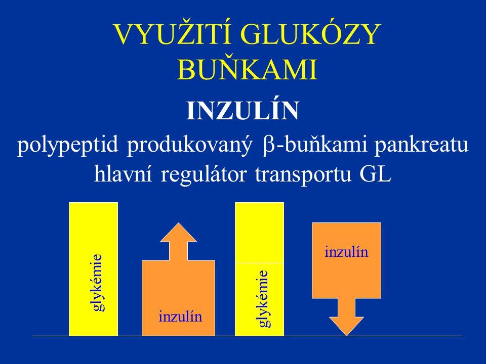 VYUŽITÍ GLUKÓZY BUŇKAMI INZULÍN polypeptid produkovaný  -buňkami pankreatu hlavní regulátor transportu GL glykémie inzulín
