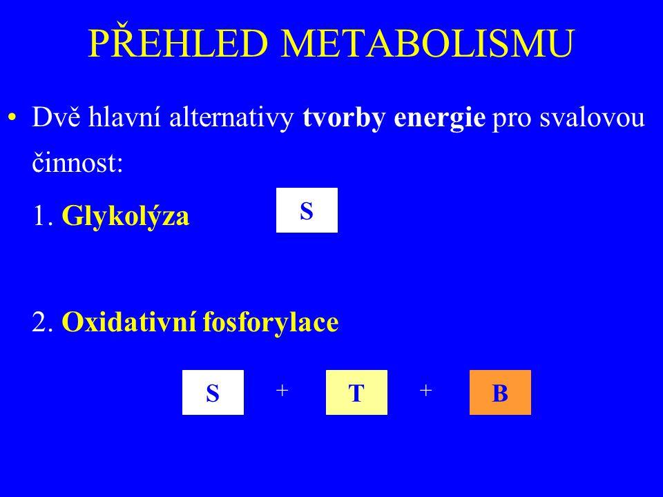 PŘEHLED METABOLISMU Dvě hlavní alternativy tvorby energie pro svalovou činnost: 1. Glykolýza 2. Oxidativní fosforylace S STB ++