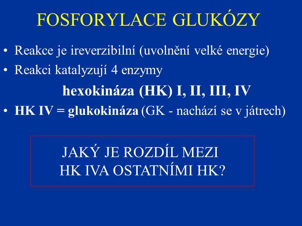 FOSFORYLACE GLUKÓZY Reakce je ireverzibilní (uvolnění velké energie) Reakci katalyzují 4 enzymy hexokináza (HK) I, II, III, IV HK IV = glukokináza (GK - nachází se v játrech) JAKÝ JE ROZDÍL MEZI HK IVA OSTATNÍMI HK?