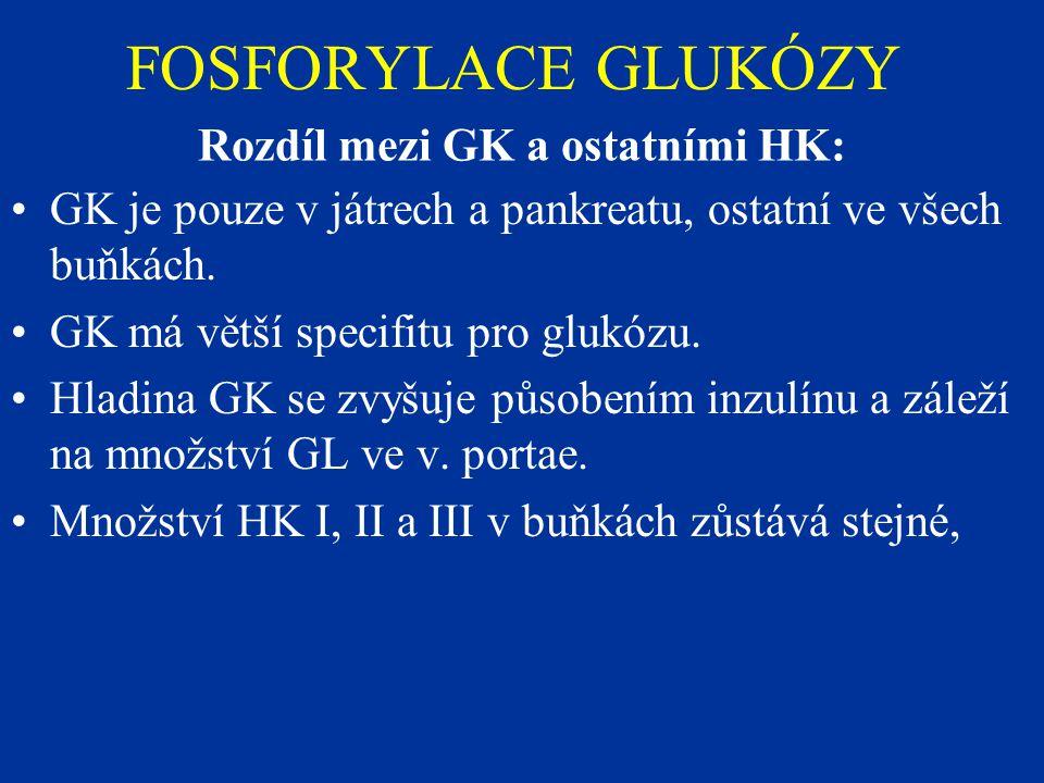 FOSFORYLACE GLUKÓZY Rozdíl mezi GK a ostatními HK: GK je pouze v játrech a pankreatu, ostatní ve všech buňkách. GK má větší specifitu pro glukózu. Hla