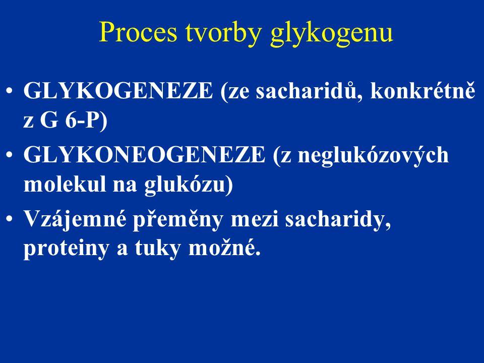 Proces tvorby glykogenu GLYKOGENEZE (ze sacharidů, konkrétně z G 6-P) GLYKONEOGENEZE (z neglukózových molekul na glukózu) Vzájemné přeměny mezi sachar