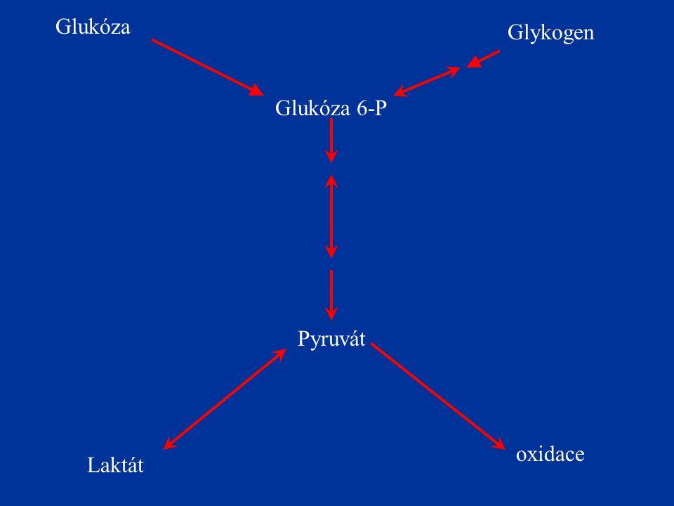 Glukóza Glykogen Glukóza 6-P Pyruvát Laktát oxidace